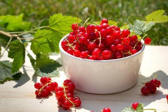 9 простых рецептов приготовления желе из ягод черной смородины на зиму