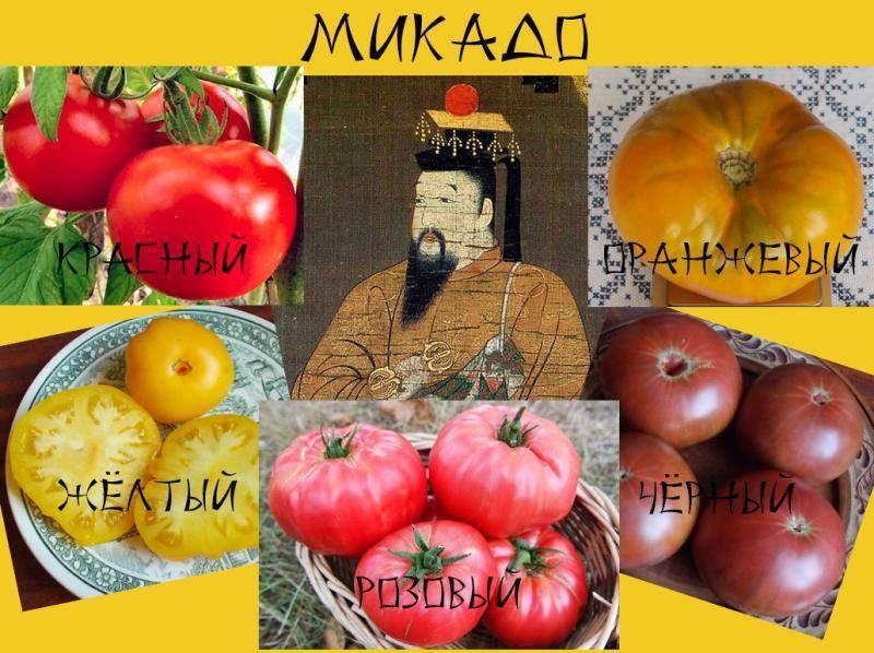 Император огорода – сорт томата «петр первый» f1: описание, фото и особенности выращивания