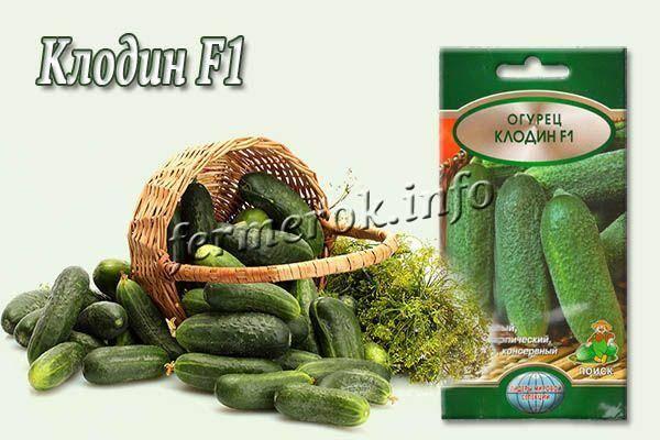 Гибридный огурец клодин f1 — описание, агротехника, отзывы огородников