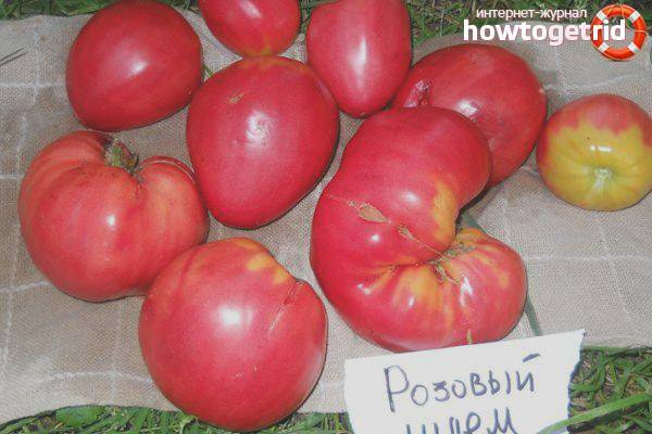 Томат золотые купола — описание сорта, урожайность, фото и отзывы садоводов