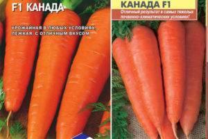 Характеристика и описание гибрида моркови канада f1, выращивание и уход