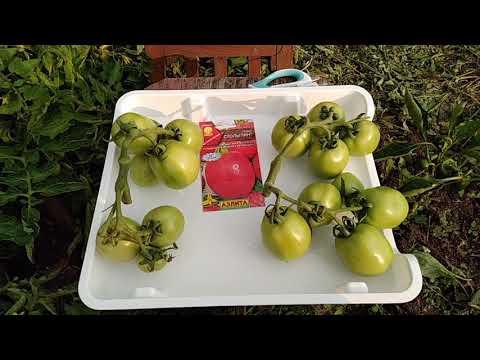 Характеристика и описание сорта томата Столыпин, его урожайность