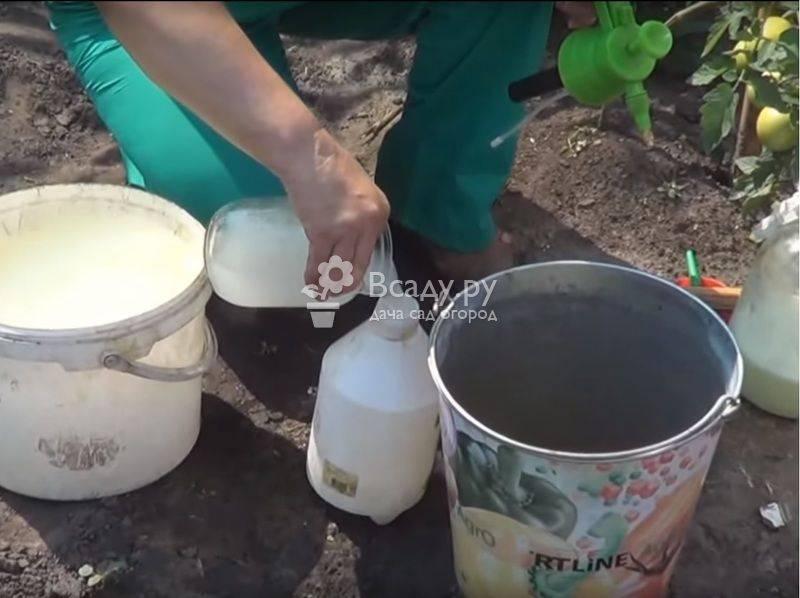 Опрыскивание огурцов раствором из молока и йода: подкормка и профилактика болезней в одном флаконе!