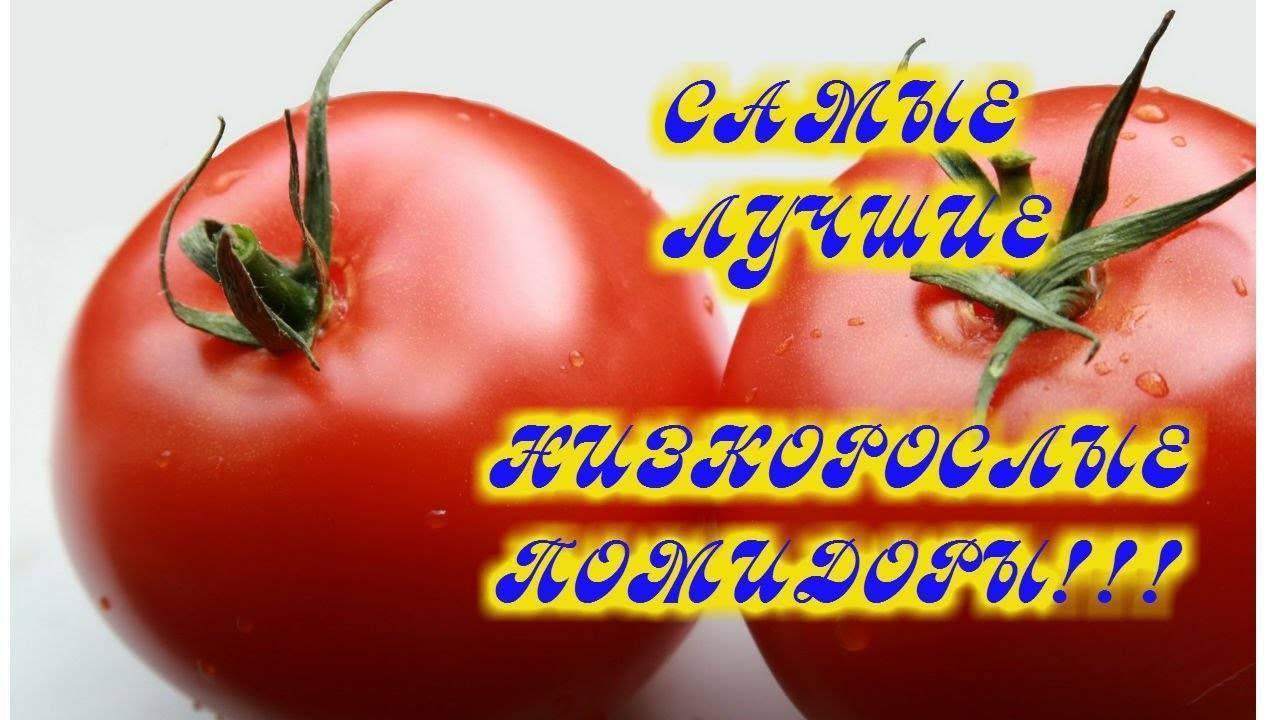 Характеристика и описание сорта томата Союз 8, его урожайность