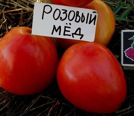 Характеристика и описание сорта томата Розовый Мед и его урожайность
