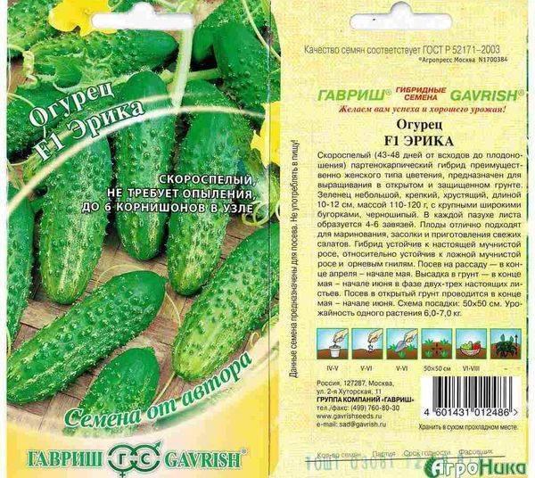Правила и особенности выращивания огурцов в ленинградской области