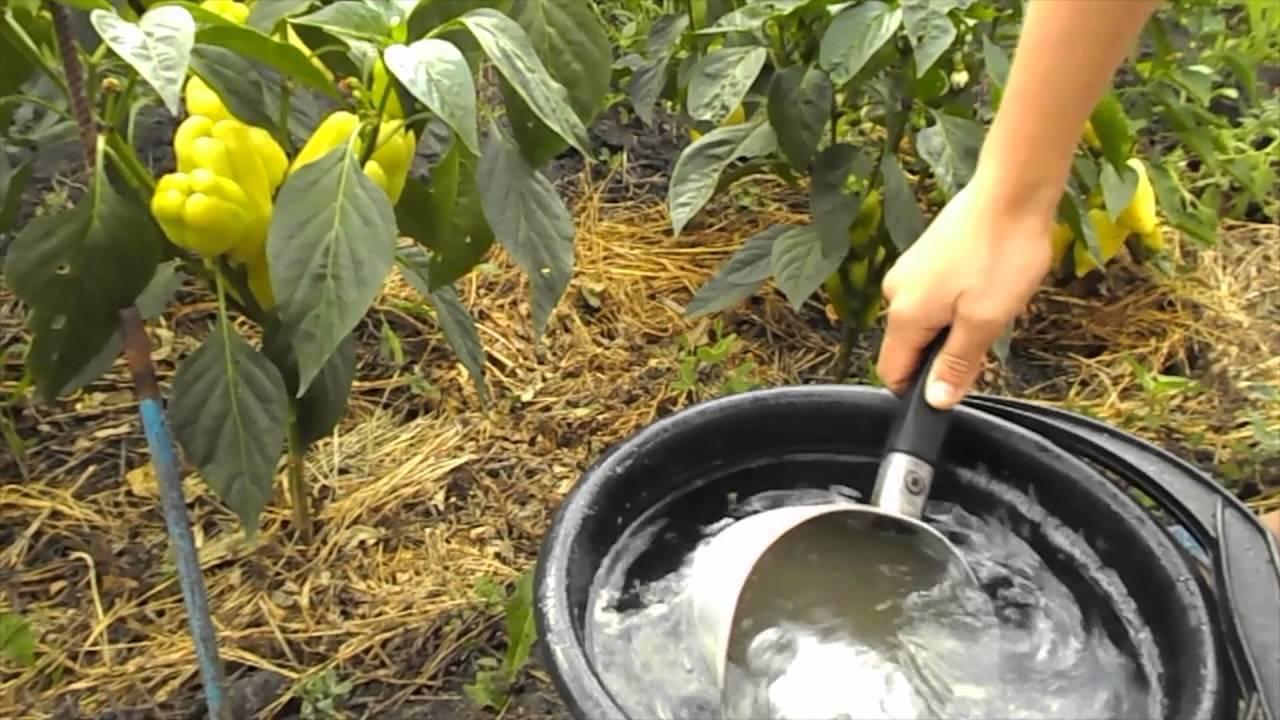 Настой крапивы для подкормки растений — запишите рецепт зеленого удобрения из крапивы.