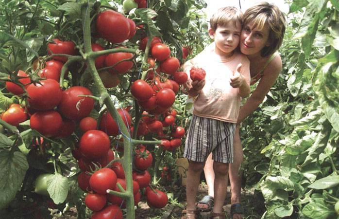 Томат зеленоплодный изумрудные купола f1: описание, урожайность, техника выращивания, отзывы