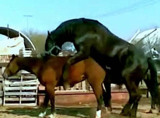 Беременность и роды у лошади: признаки, продолжительность, процесс