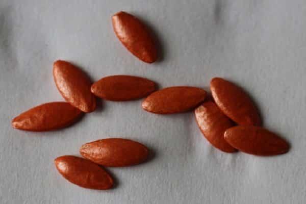 Замачивание семян огурцов перед посадкой: правила обработки