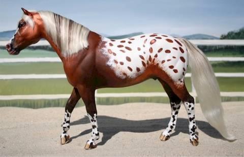 Порода лошадей аппалуза (аппалузская) – особенности характера, внешнего вида и содержания