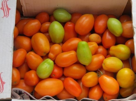 Лиза – среднеранний сорт томатов. рекомендации, описание, секреты богатого урожая
