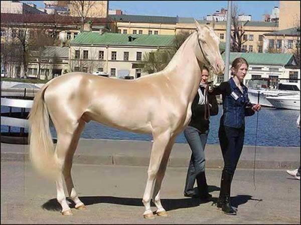 Самые большие лошади в мире: рекордсмены по росту и весу
