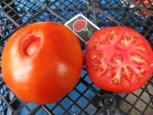 Крупные и ранние помидоры сорта бычий лоб