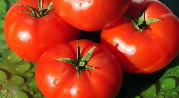 Безумие касади сорт томата