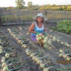 Лук эксибишен: выращивание из семян, когда сажать