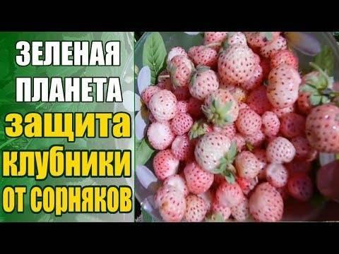 Применение гербицидов для клубники от сорняков