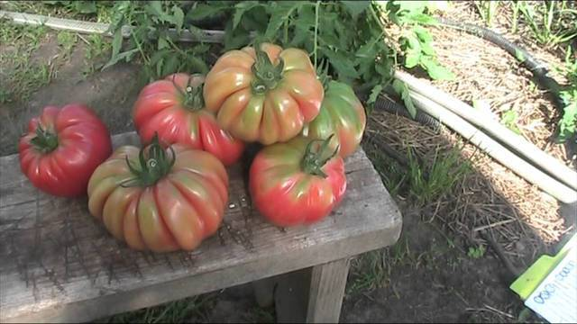 «грибное лукошко»: особенности томатов и правила их выращивания