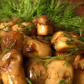 Как солить грибы в домашних условиях? как солить грибы на зиму в банках?