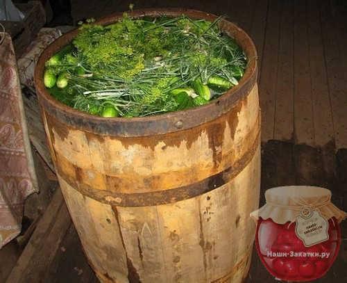 Соленые огурцы на зиму в банках холодным способом — 6 рецептов приготовления