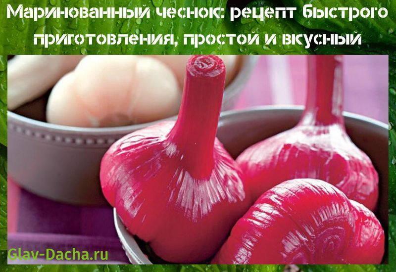 Рецептымаринования помидоров с красной смородиной на зиму