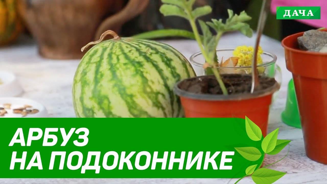 Как легко вырастить и ухаживать за тыквой на балконе дома