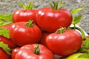 Вкусный, стойкий и раннеспелый сорт томата «тарпан f1»: описание, характеристика, посев на рассаду, подкормка, урожайность, фото, видео и самые распространенные болезни томатов