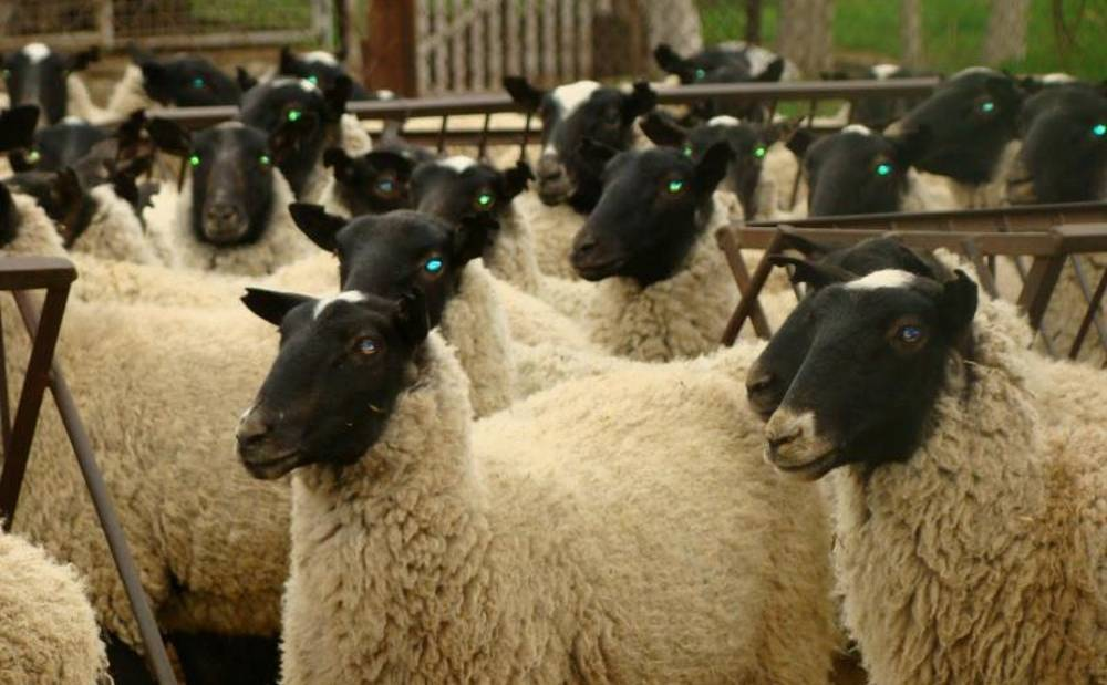 Разведение бычков: чем кормить для быстрого роста в домашних условиях?