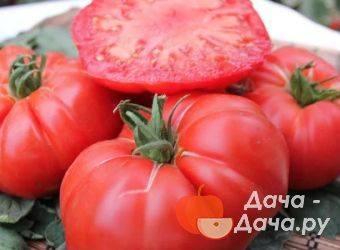 Описание томата жорик-обжорик и урожайность детерминантного сорта
