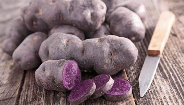 Цветной картофель – сорта с фиолетовой, синей и красной мякотью