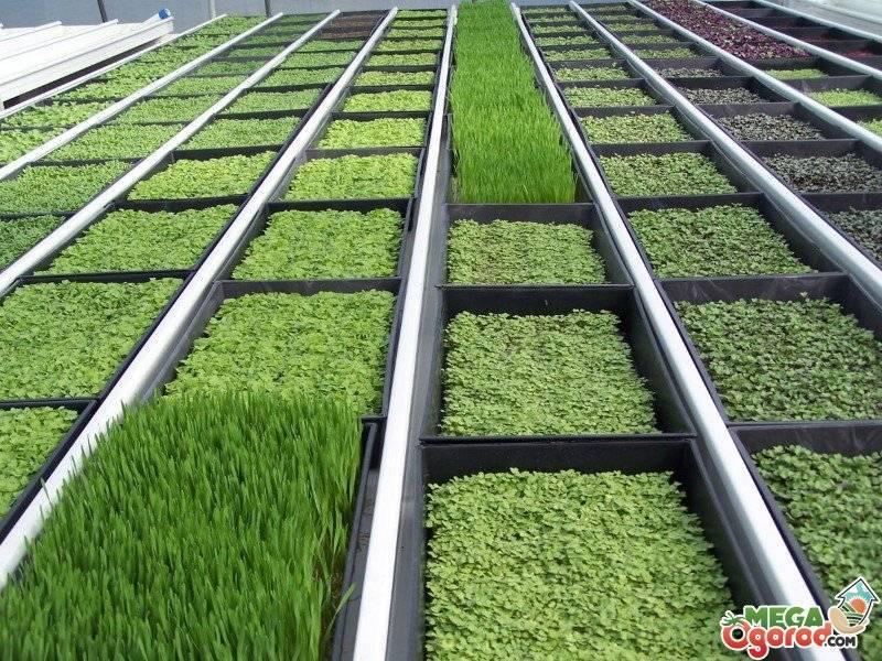 Как выращивать овощи и ягоды на гидропонной системе круглый год
