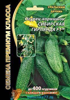 Огурец магнат: описание и характеристика сорта, мнение дачников с фото