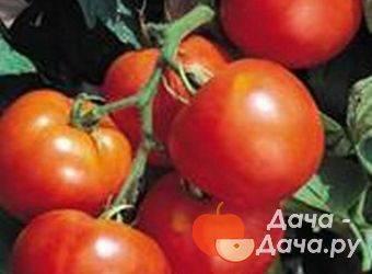 Описание сорта томата лили марлен и его характеристики
