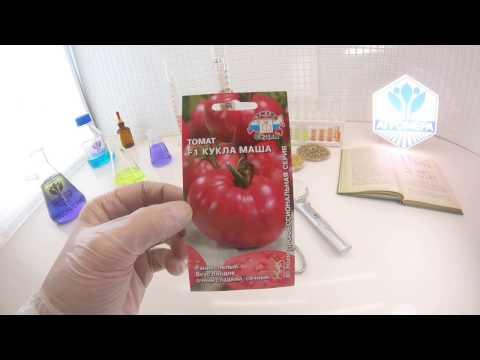 Описание и урожайность томата наша маша с фото и отзывами