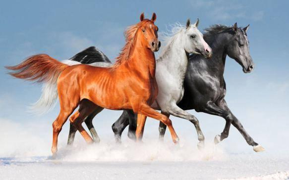 Порода лошадей русский рысак