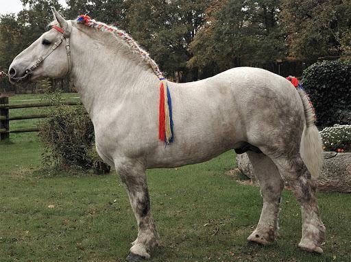 Какие породы лошадей могут исчезнуть в ближайшее время?
