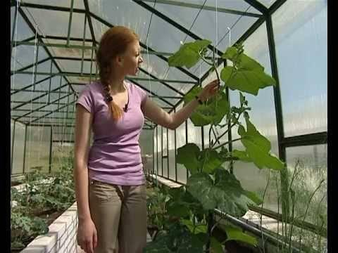 Посадка дыни в 2020 году: сроки посева, выращивание и уход