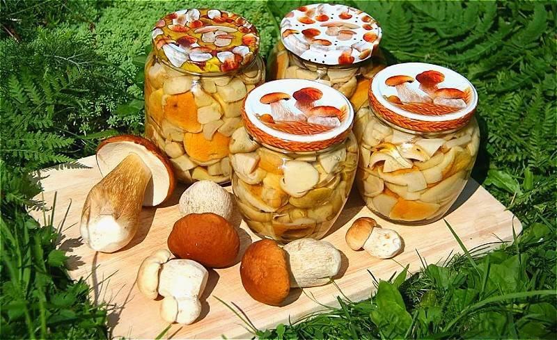 Самые лучшие рецепты засолки грибов: простые и вкусные способы как солить лесные грибы в банках, кастрюле, ведре и под гнетом в домашних условиях. какие грибы подходят для засолки, и сколько дней солят грибы?