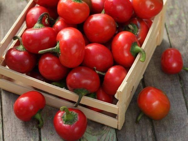 Характеристика и описание сорта перца гогошары, выращивание и уход