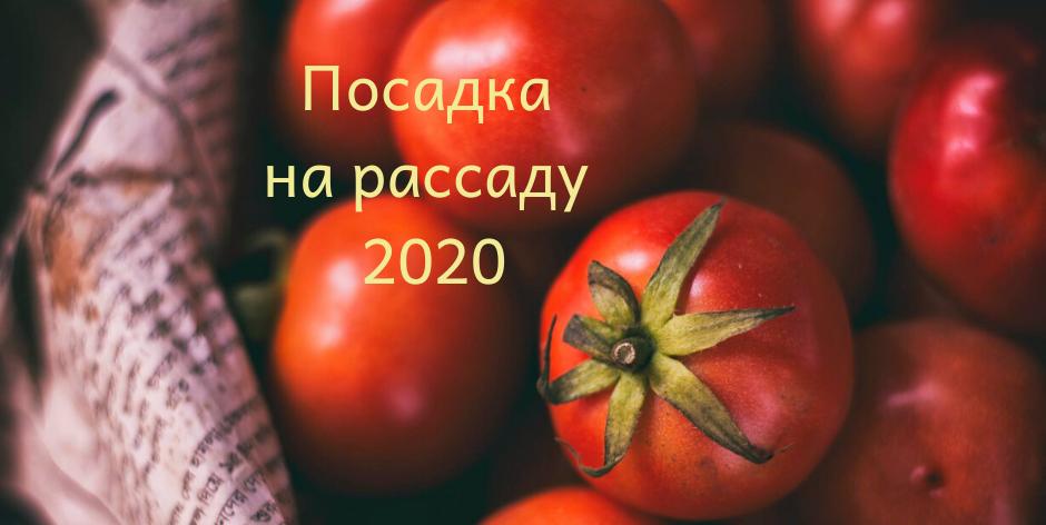 Благоприятные посадочные дни в мае 2020 года для томатов