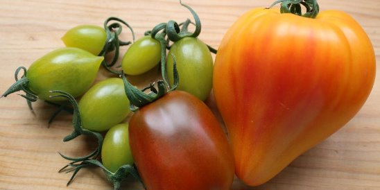 Подарок из европы — томат немецкая красная и оранжевая клубника на вашем огороде: описание сорта и фото