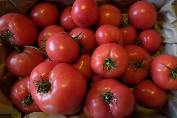 Неимоверно урожайный томат машенька: детальное описание, выращивание, отзывы