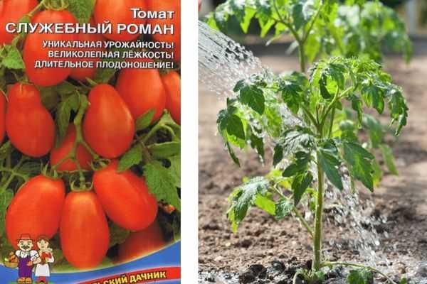 Описание сорта томата марьюшка, особенности выращивания и ухода