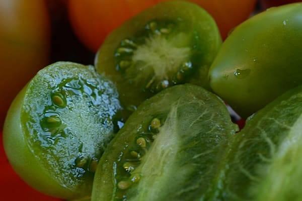 Томат драгоценность: описание и характеристика сорта, выращивание и уход с фото