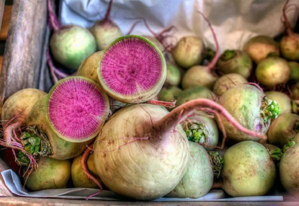 Необычный на вид и приятный на вкус арбузный редис: чем хорош и как вырастить