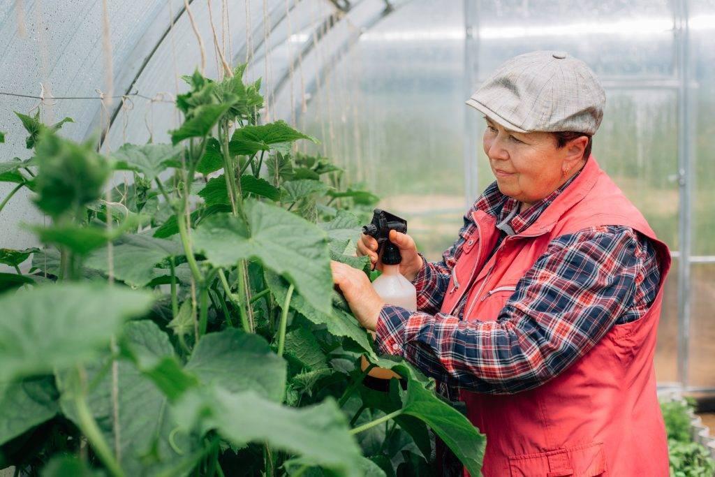 Фитоспорин: инструкция по применению для обработки почвы и растений