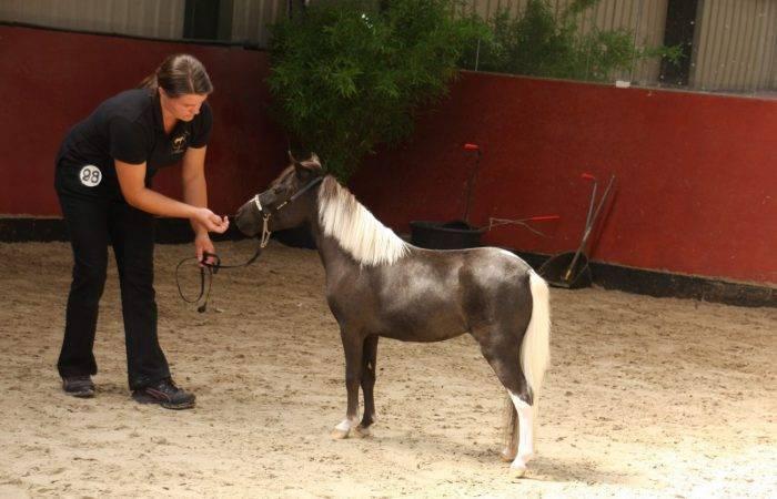 Как построить и оборудовать стойла для лошадей, размеры и схемы конюшни