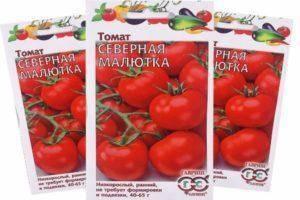 Описание томата северная малютка, его выращивание, отзывы огородников
