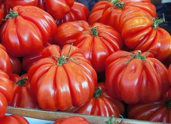 Отзывы огородников о томатах пузата хата