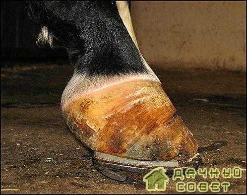 Причины появления колик у лошадей и как их лечить